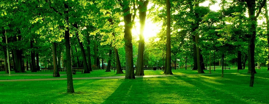 green_grass_in_the_park-1024x768